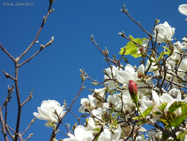 Magnolia - Have a great weekend!