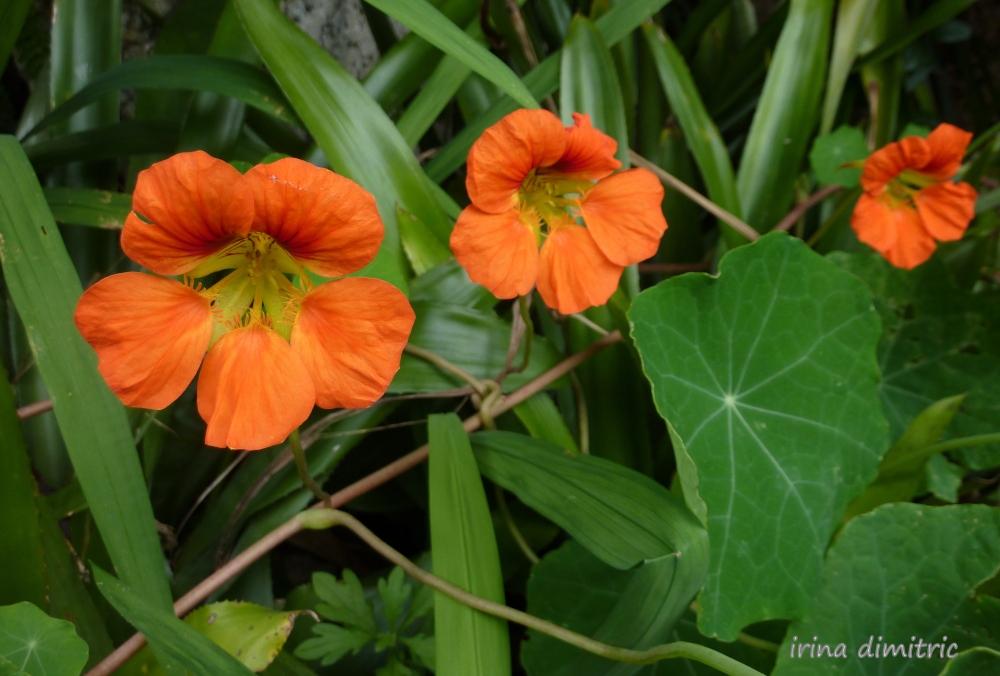 Weekly Photo Challenge: Orange (2/4)