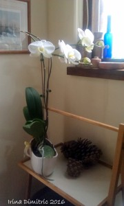 imag3900-white-orchid-near-the-window